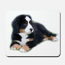 bernese-mountain-puppy_ Mousepad