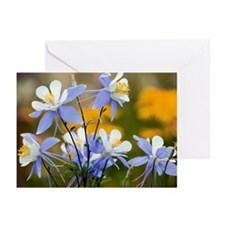Blue Columbine (Aquilegia coerulea) - Greeting Car