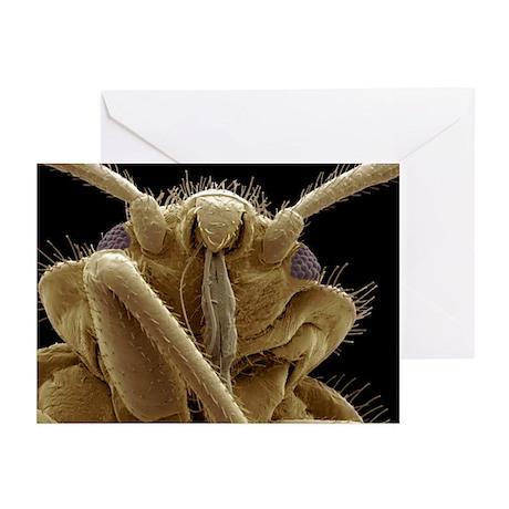 Bedbug head, SEM - Greeting Cards (Pk of 20)