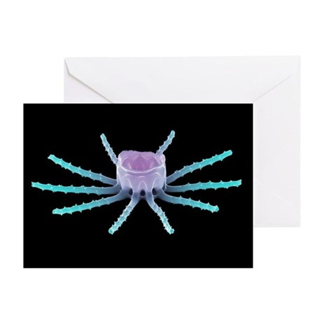 Diatom alga, SEM - Greeting Cards (Pk of 20)