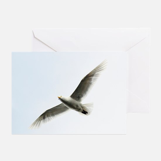 Glaucous Gull (Larus hyperboreus) - Greeting Cards