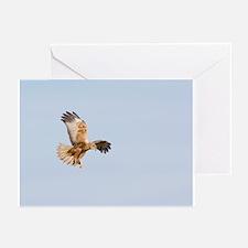 Marsh harrier hunting - Greeting Cards (Pk of 20)