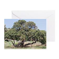 Mastic tree (Pistacia lentiscus var.chia) - Greeti