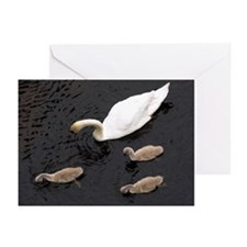Mute swan and cygnets - Greeting Cards (Pk of 20)