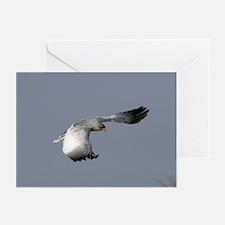 Pale chanting goshawk - Greeting Cards (Pk of 20)