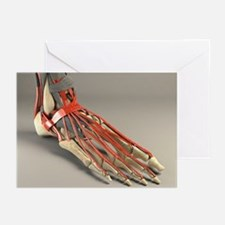 Ankle joint and foot, artwork - Greeting Cards (Pk