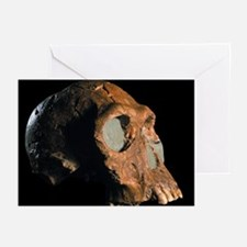 Homo habilis skull - Greeting Cards (Pk of 20)