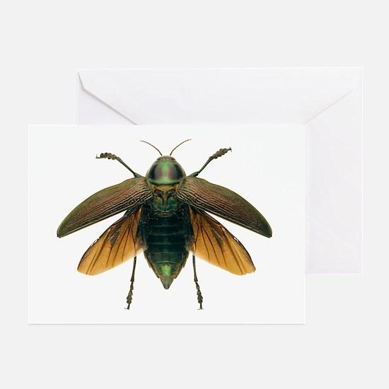 Metallic wood-boring beetle - Greeting Cards (Pk o