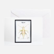 Stick insect specimen - Greeting Cards (Pk of 20)
