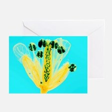 Thale cress flower, micrograph - Greeting Cards (P