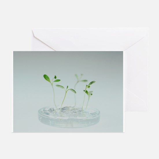 Plant biotechnology - Greeting Cards (Pk of 20)