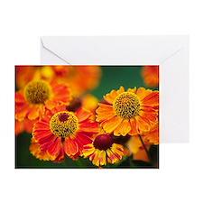 Common sneezeweed (Helenium autumnale) - Greeting