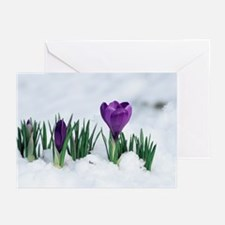 Crocus flower in the snow - Greeting Cards (Pk of