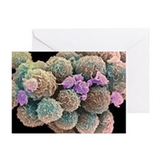 White blood cells and platelets - Greeting Cards (
