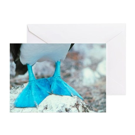 Blue-footed booby feet - Greeting Cards (Pk of 20)