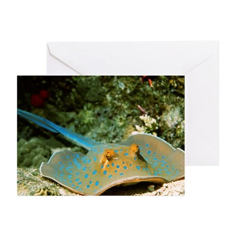 Blue-spotted fantail ray - Greeting Cards (Pk of 2