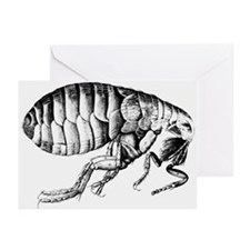Drawing of a flea - Greeting Cards (Pk of 20)