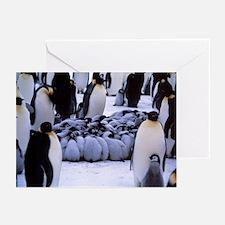 Emperor penguin chicks huddling - Greeting Cards (