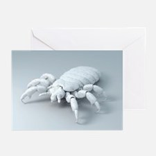 Head louse, artwork - Greeting Cards (Pk of 20)