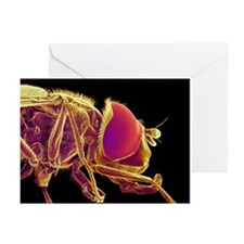 Hover fly, SEM - Greeting Cards (Pk of 20)