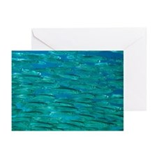 Herring shoal - Greeting Cards (Pk of 20)
