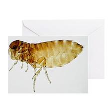 LM of bird flea - Greeting Cards (Pk of 20)
