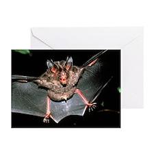 Micronycteris bat - Greeting Cards (Pk of 20)