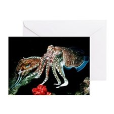 Pharaoh cuttlefish - Greeting Cards (Pk of 20)