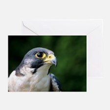 Peregrine falcon - Greeting Cards (Pk of 20)