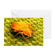 SEM of a bed bug - Greeting Cards (Pk of 20)