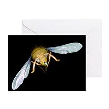 Wasp with microchip, SEM - Greeting Cards (Pk of 2