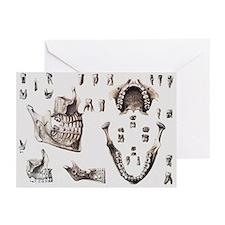 Dental anatomy - Greeting Cards (Pk of 20)