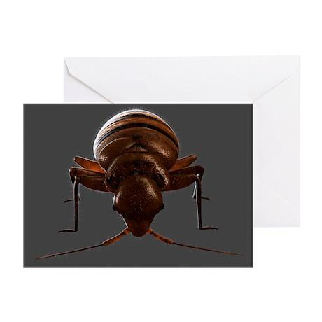Bedbug, artwork - Greeting Cards (Pk of 20)