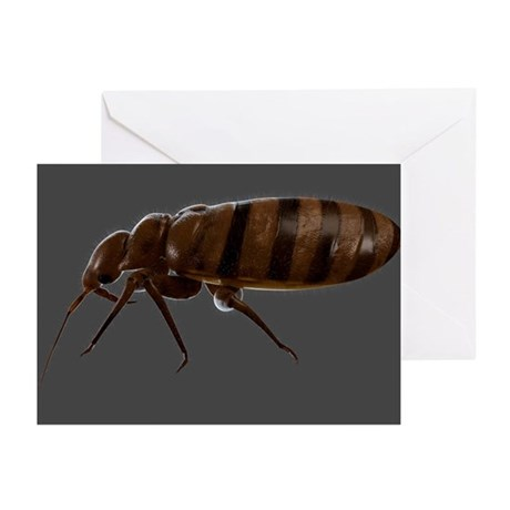 Bedbug, artwork - Greeting Cards (Pk of 20)
