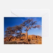 Camel thorn tree (Acacia erioloba) - Greeting Card