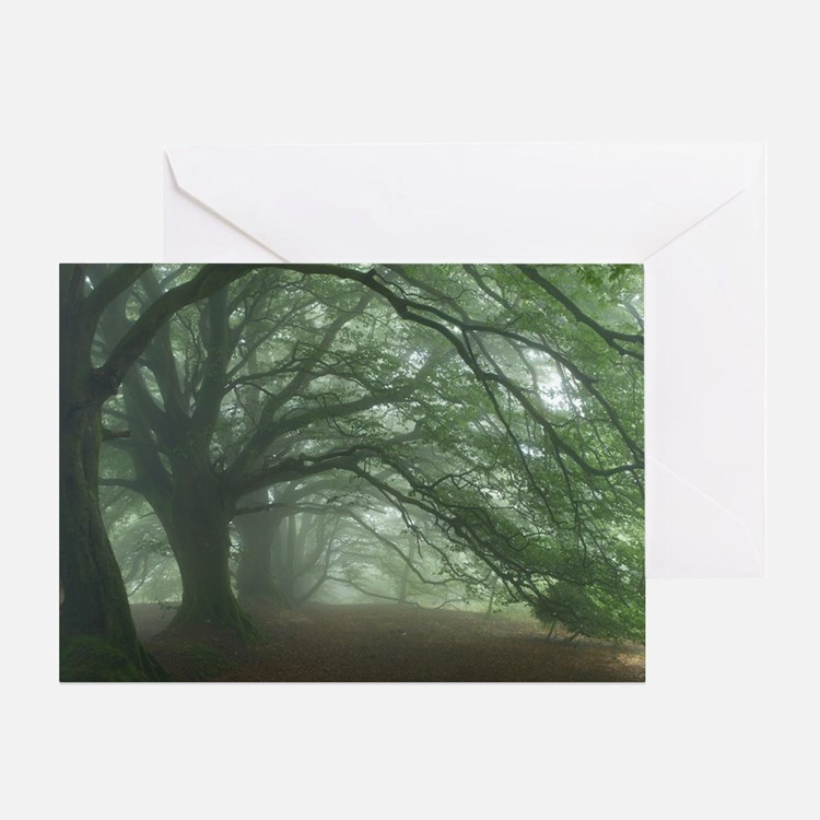 Ancient Beech woodland - Greeting Card