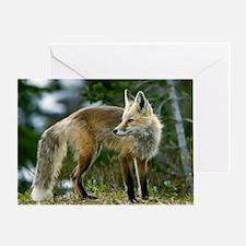 Cascade red fox - Greeting Card