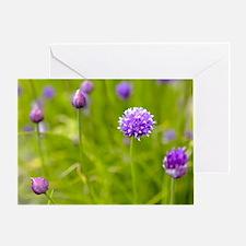 Chives (Allium schoenoprasum) - Greeting Card