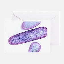 Clostridium difficile bacteria, TEM - Greeting Car