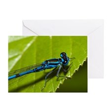Common Blue Damselfly - Greeting Card