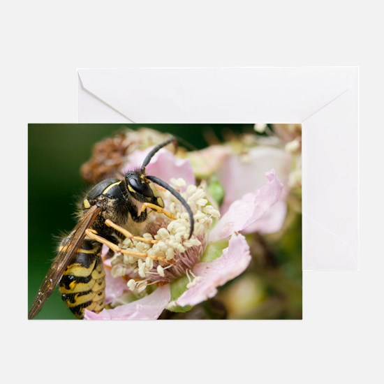Common wasp feeding on a flower - Greeting Card