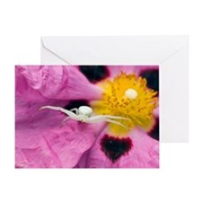 Crab spider - Greeting Card