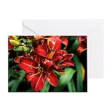 Daylily (Hemerocallis 'George Rodewald') - Greetin
