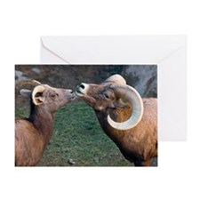 Desert Bighorn Sheep - Greeting Card