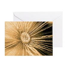 Dandelion pappus, SEM - Greeting Card