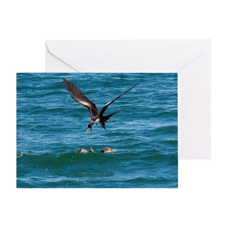 Great frigatebird and blue-footed booby - Greeting