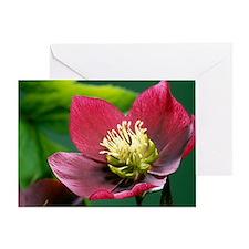 Hellebore flowers - Greeting Card