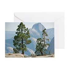 Jeffrey pine and whitebark pine trees - Greeting C
