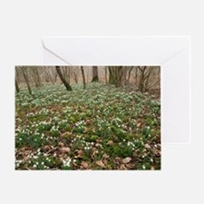 Snowdrops (Galanthus) in woodland - Greeting Card