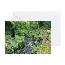 Stream and woodland in Devon - Greeting Card